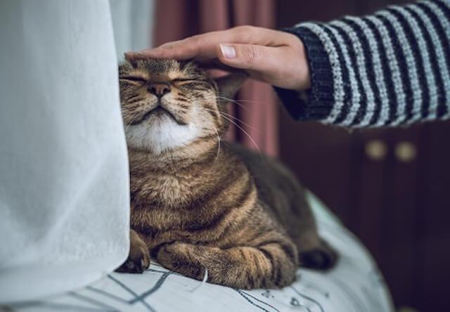 別れた後、犬より猫の飼い主が感じやすい後悔は「健康管理」