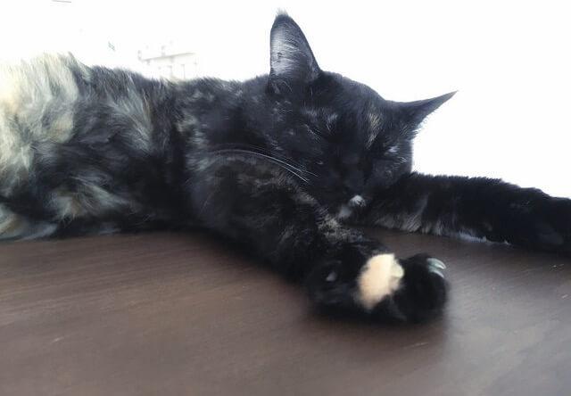 夏バテ気味のサビ猫 – 猫の写真素材