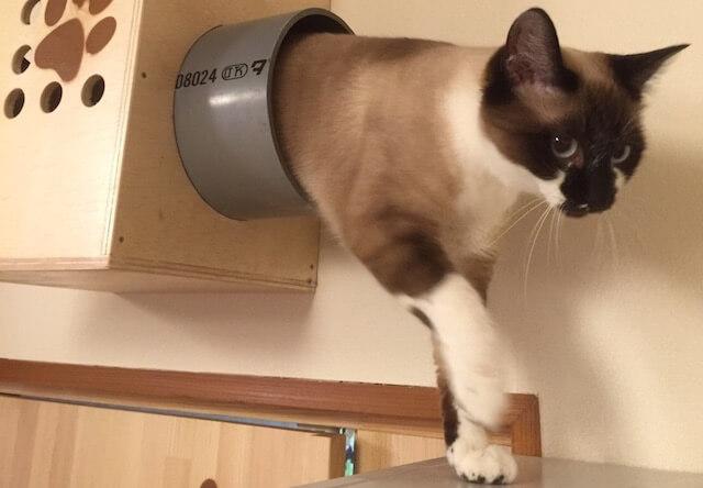 青森県の八戸市に、保護猫カフェ「ねこぱんち」がオープン