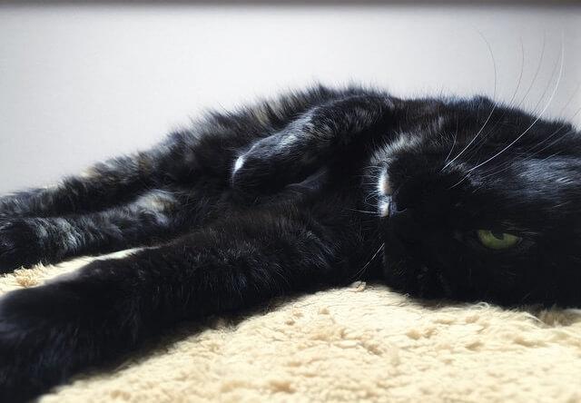 頭を床につけて考え事 - 猫の写真素材