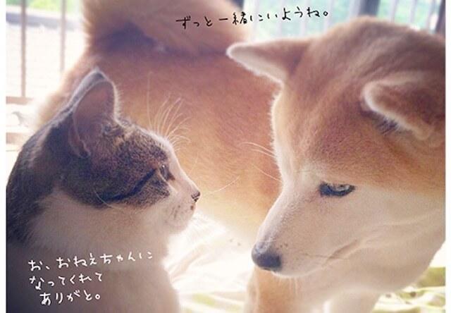 ゆるゆるで癒される「柴犬フクと猫のタラ」の写真集が発売
