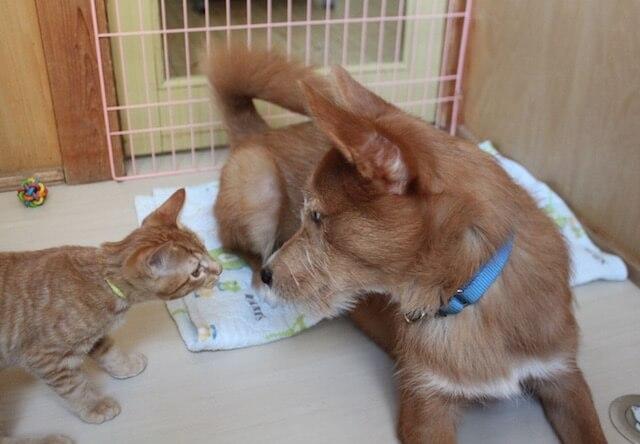 飼い主の入院時に最長3ヶ月まで預かり可能、ペット飼育支援保険