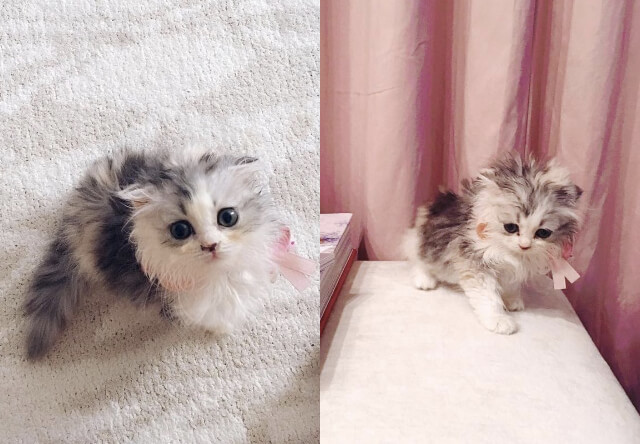 小嶋陽菜(こじはる)が猫と同棲開始、Instagramアカウントも