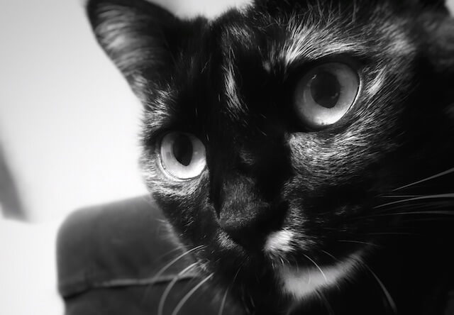 興味津々 - 猫の写真素材