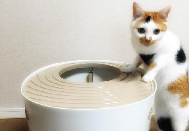 起立した三毛猫 - 猫の写真素材
