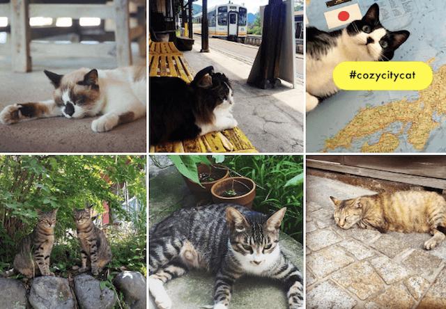 ELLE(エル)の新企画サイト「エル・ローカル(ELLE LOCAL)」で、猫の写真キャンペーンを開催中