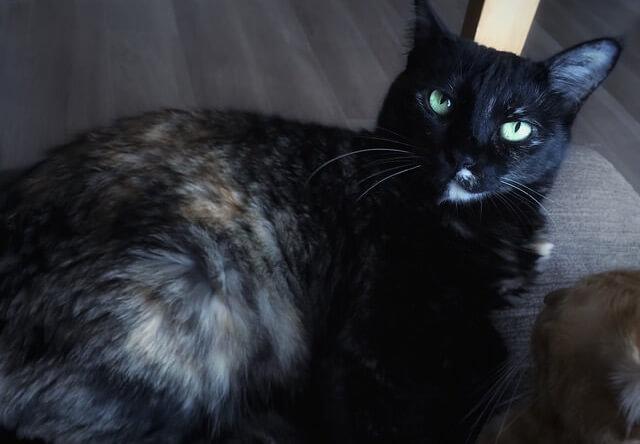 きっとした顔の猫 - 猫の写真素材