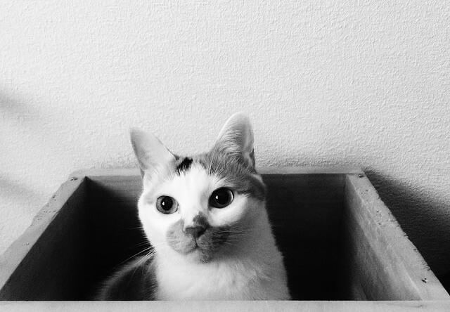 まじまじと見る三毛猫 - 猫の写真素材