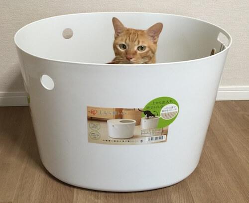 「上から猫トイレ」をチェックする茶トラ