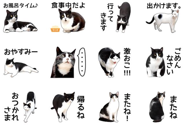 LINEスタンプ「いろんな黒白猫♪」2