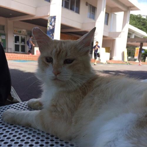 福島大学の猫