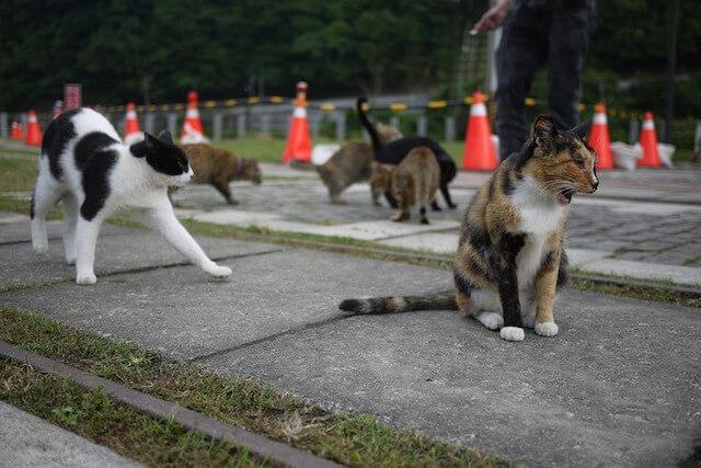 台湾のホウトンで暮らす猫たち