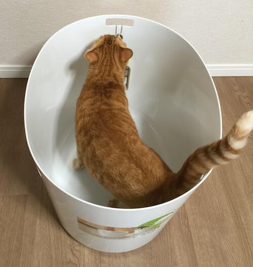 「上から猫トイレ」の広さは十分