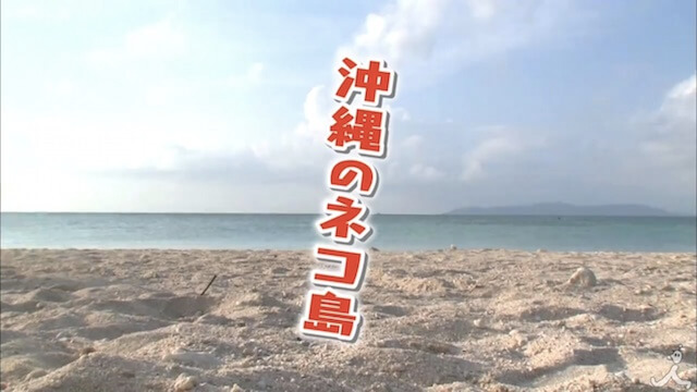沖縄の島で暮らすネコを徹底調査