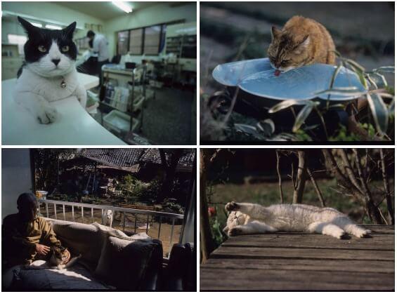 写真展 「やきものの里のネコ」展示写真イメージ2