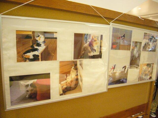 もりねこ写真展の猫写真2