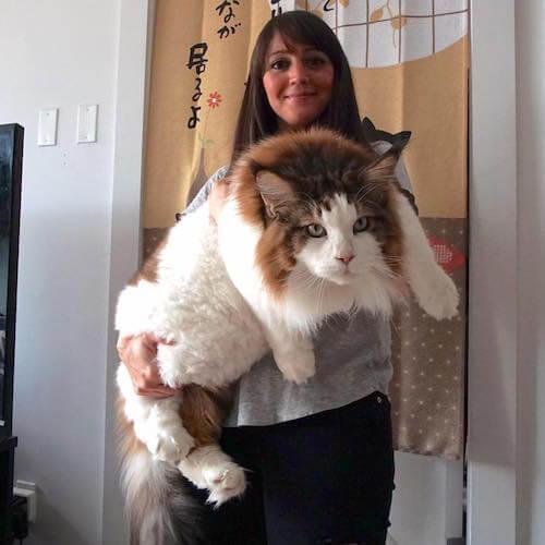 猫のぬいぐるみを抱っこしているかのようにも見えます