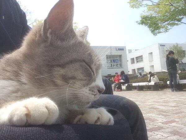 サークルメンバーとくつろぐ猫