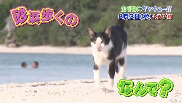 砂浜を歩く猫がいるのはなぜ?