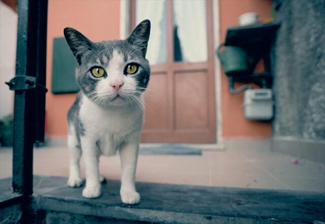 イタリア・ポルトベネーレの猫