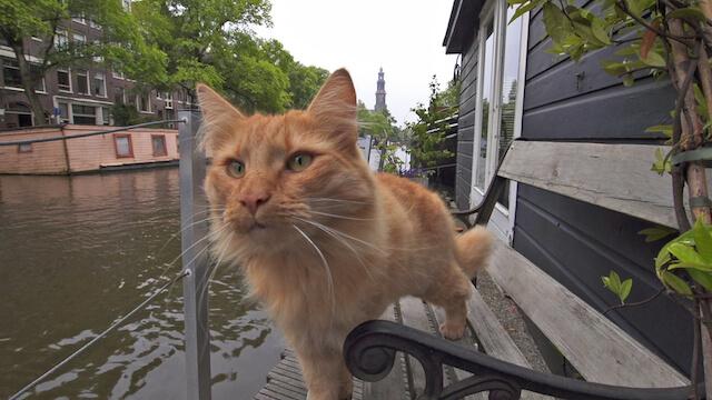 運河沿いをパトロールする猫