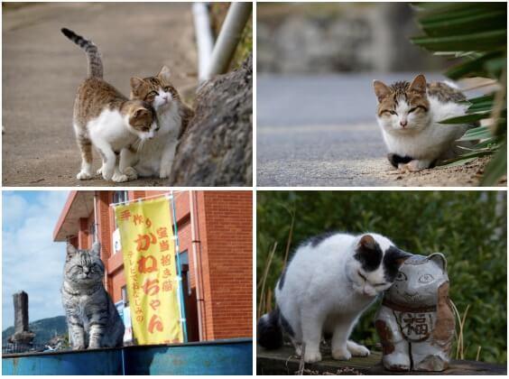 写真展 「やきものの里のネコ」展示写真イメージ4