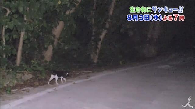 夜徘徊する猫を追うと驚きの光景が