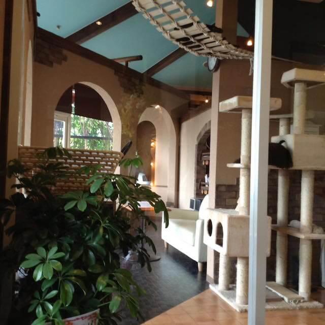 猫カフェ「プリムローズ」の店内写真1