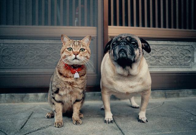 長崎県・福江市の猫