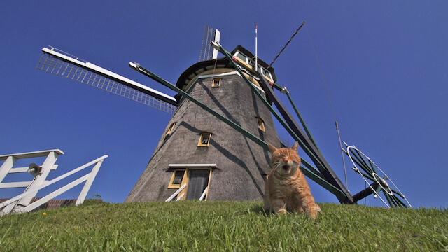 オランダの風車の家に住む猫