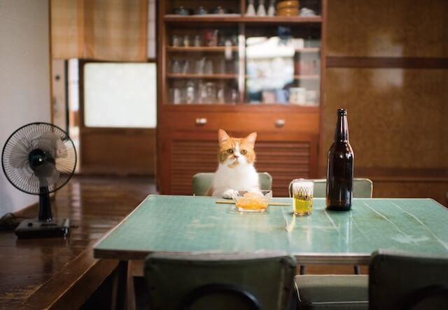 君も1杯やる?