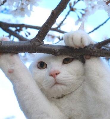 人気の白猫にゃんきっちゃん