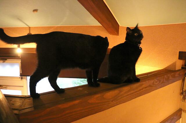 猫カフェ「プリムローズ」の店内写真3