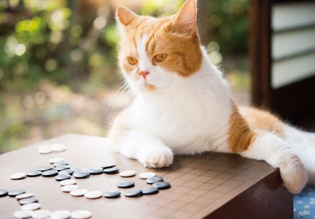 たまには囲碁もたしなみますニャ