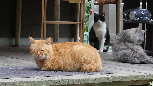 陶芸・雑貨店「温温」に住み着いた猫