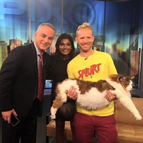 大きすぎる猫としてテレビ番組にも出演