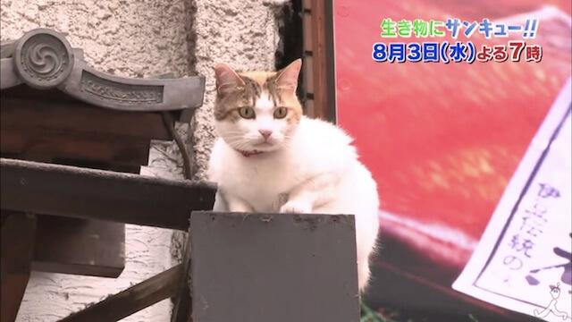 熱海の猫に遭遇