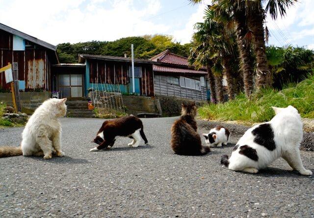 宮城県石巻市「田代島」の猫たち
