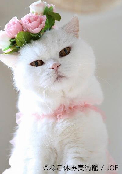JOE:美白猫の「うらちゃん」がアメリカンポップアートの世界を表現