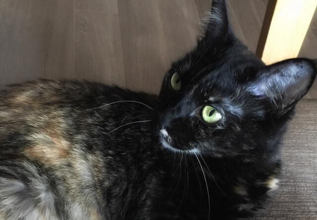 少し上から撮影した左向きのサビ猫 - 猫の写真素材