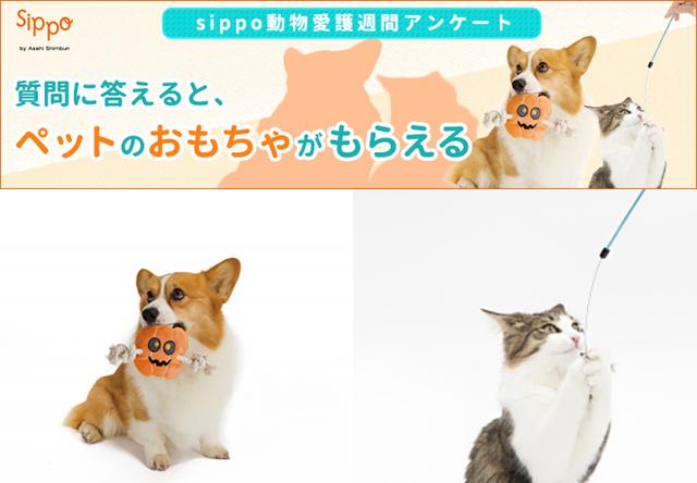sippo、20名に猫のオモチャがもらえるアンケートを実施中