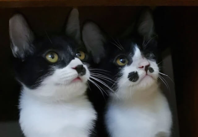 猫部でお馴染みの「フェリシモ」の本社で保護猫の譲渡会を開催