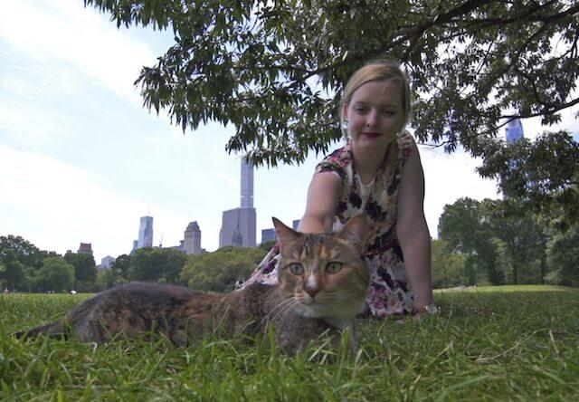 ニューヨーク・セントラルパークでくつろぐ猫