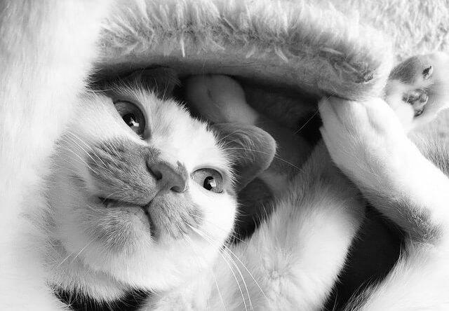 ぼんやりバンザイ - 猫の写真素材