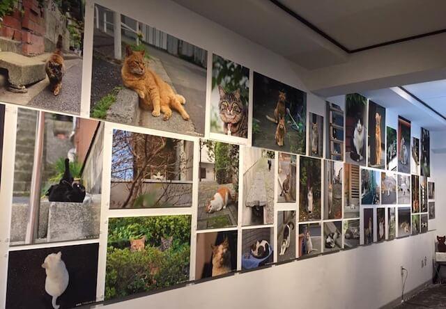東京の街ねこを撮影し続ける写真家、祖師ヶ谷大蔵で写真展を開催中