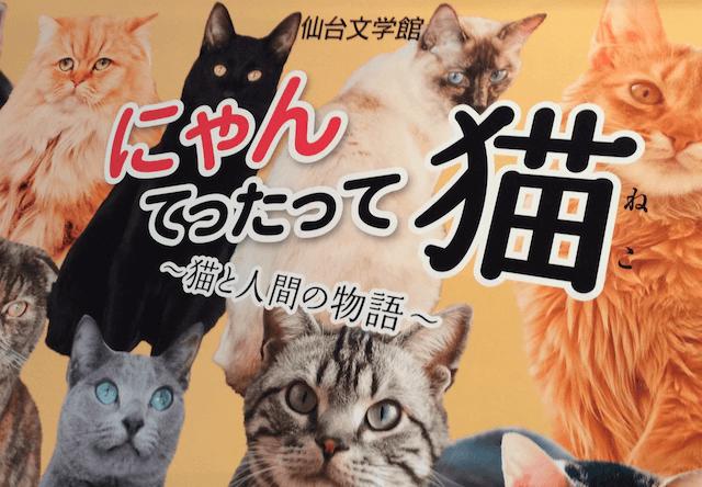 仙台文学館、にゃんてったって猫展と岩合氏の写真展を同時開催