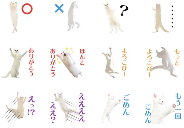 無重力猫ミルコのLINEスタンプ1