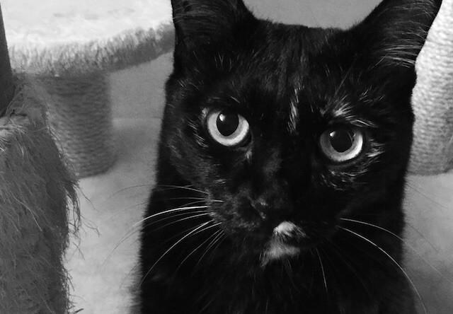 まっすぐな目 - 猫の写真素材