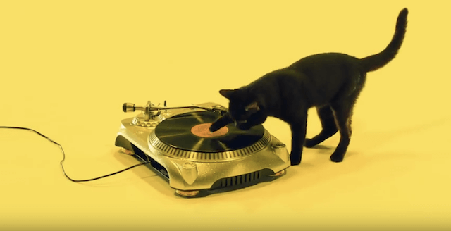 スクラッチを決める黒ネコ