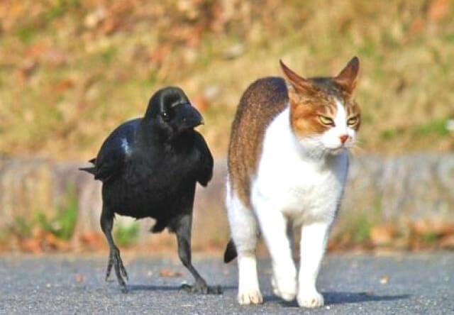 猫とカラスの仲良し写真